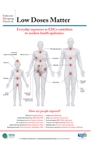 Endocrine Disrupting Chemicals and low dose effects on the body.