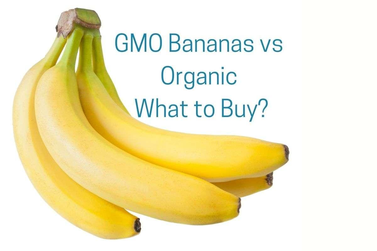 GMO Bananas vs Organic title with bunch of bananas