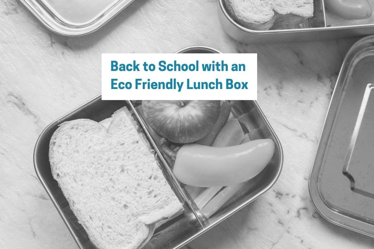 Blog Title with Title Back to School with an Eco Friendly Lunch Box